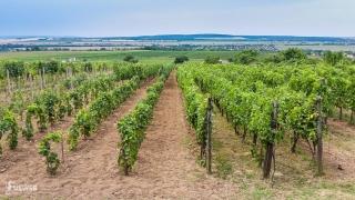 Výhľad z vinohradníckej cesty na festivale