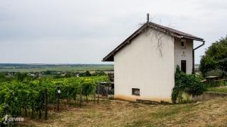 Unikátny porast na domčeku popri vinohradníckej ceste na festivale