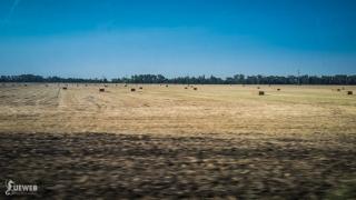 Výhľad na pole cestou do Strekova